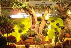 Plantarum aetnae il salone del florovivaismo mediterraneo for Cosa seminare a febbraio