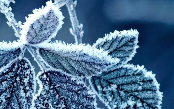 Piante Aromatiche, come proteggerle dall'inverno