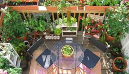 Come coltivare gli ortaggi in vaso, sul balcone di casa.