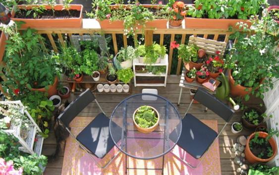 Come coltivare gli ortaggi in vaso, sul balcone di casa ...