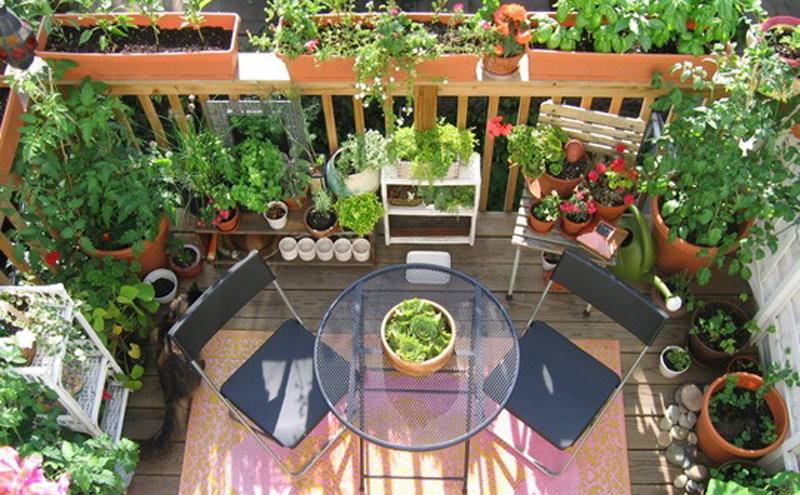 Come coltivare gli ortaggi in vaso sul balcone di casa for Giardino balcone