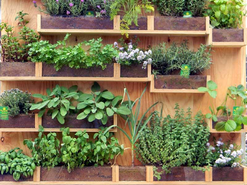 Mini Giardino Sul Balcone : Come fare l orto sul balcone e cosa coltivarci giardinaggio
