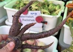 Verdure Anticancro, sceglierle nella spesa e coltivarle a casa