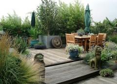 Come si fa una talea giardinaggio magazine la rivista for Vendita piante bambu gigante