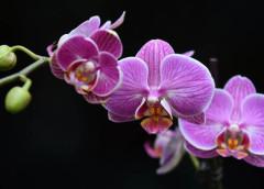 Come coltivare le orchidee da seme.
