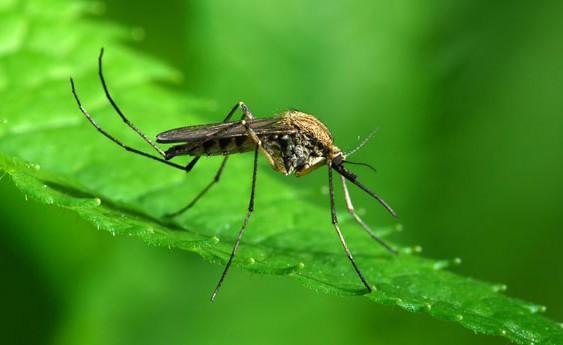 Come uccidere le zanzare in giardino - Rimedi contro le zanzare in giardino ...