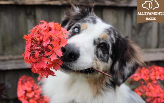 Un cane di Razza nel tuo giardino, come sceglierlo