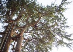 Treeclimbing: in cosa consistono questi speciali interventi di giardinaggio?