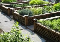 Orti spontanei: sapori e segreti delle erbe alimentari