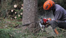 Buone pratiche e dispositivi di protezione utili quando si usa la motosega
