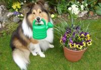 Difendere il giardino da animali domestici