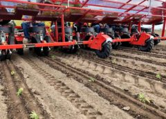 La coltura della canapa, il futuro passa per la tecnologia