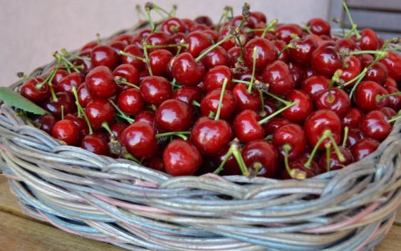 Come coltivare l'Amareno (Prunus Cerasus) dal seme