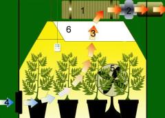 Coltivazione della cannabis indoor