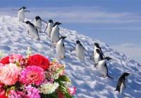 Guano di pinguino