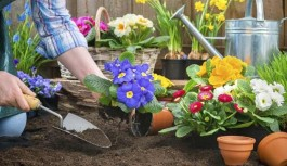 Arriva la primavera, cosa seminare sul terrazzo