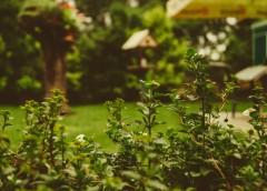 5 regole per mantenere il giardino sempre in ordine!