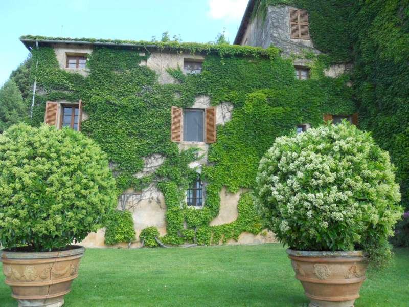 Piante Con La I : Le viti americane giardinaggio magazine la rivista